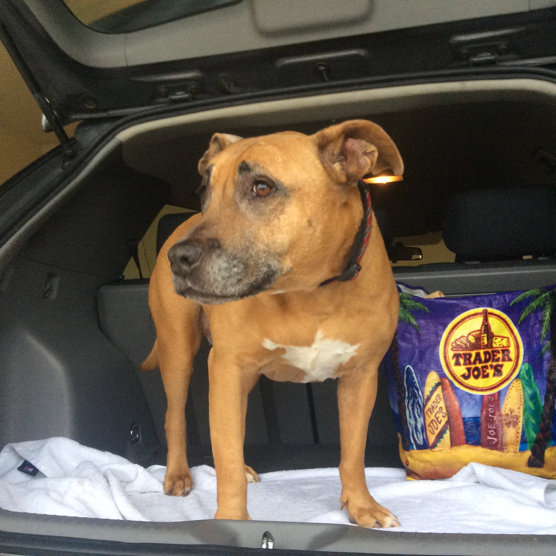 Fostering a Senior Dog: Turtle and Grace's Story ...