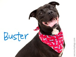 Buster_A676458
