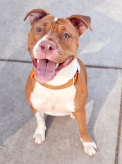 SNICKERS A696159 007p