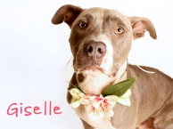 Giselle - to Canada