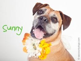 Sunny - to rescue