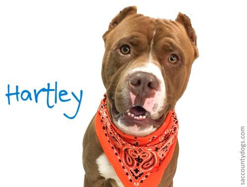 Hartley_A732027