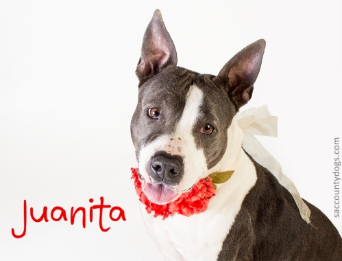 Juanita_A730396
