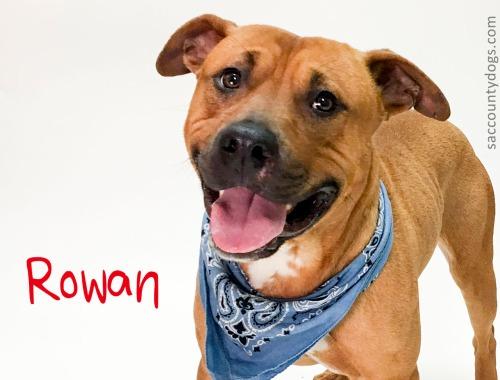 Rowan_A733838