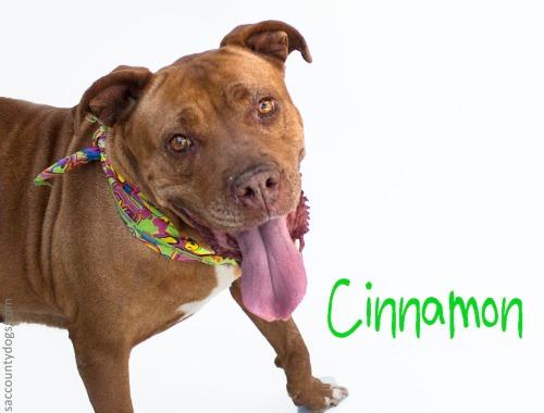Cinnamon_A736607