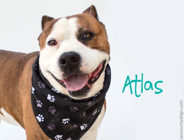 Atlas_A737499