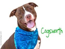 Cogsworth_A738874