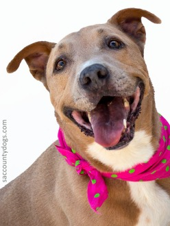 Adoptable Dogs From Bradshaw Animal Shelter Sacramento Meet Your New Best Friend