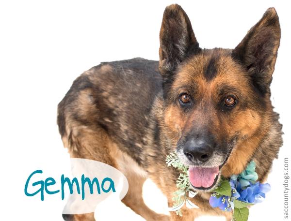 Gemma_A740864