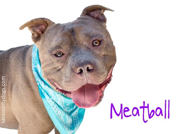 Meatball_A740168