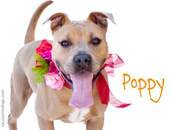 Poppy_A739736