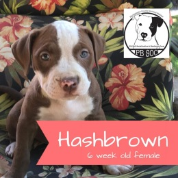 Hashbrown - Adopted!