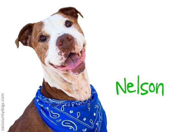 Nelson_A742603