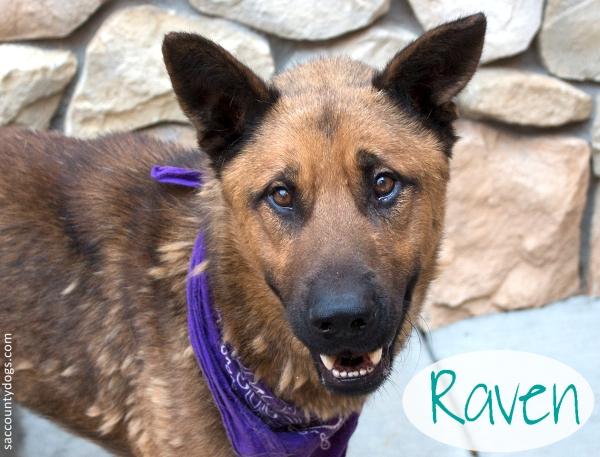 Raven_A744236
